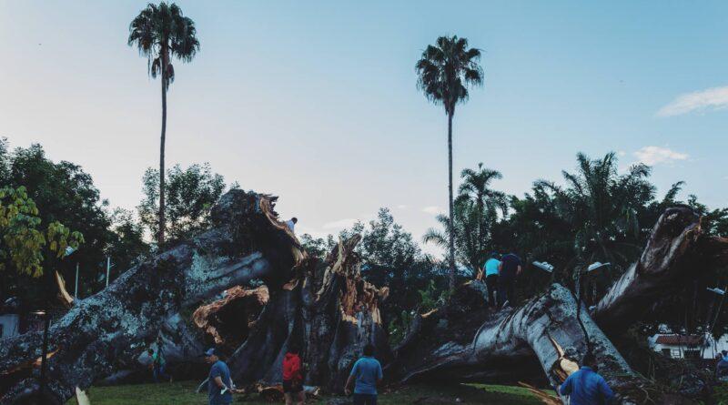 ¡Hasta siempre, Ceiba de la Libertad en Gigante ¡